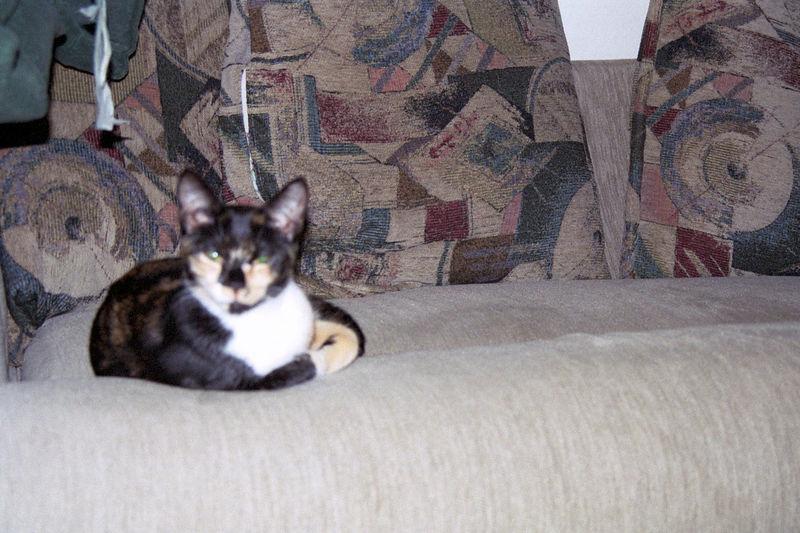 2003 12 - Cats 52.jpg