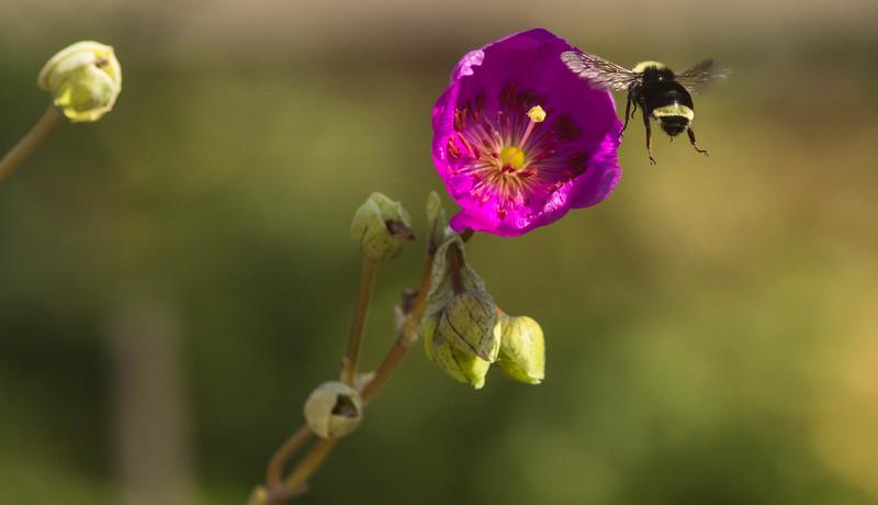 Bee Free Flight
