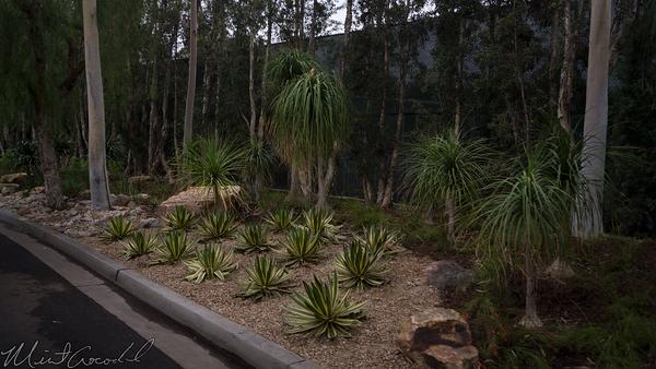 Disneyland Resort, Disneyland, Plant, Water, Desert, Landscape