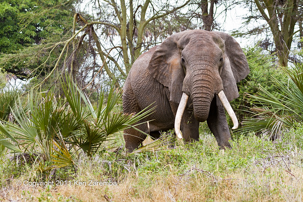 Kenya's Meru National Park/Elsa's Kopje