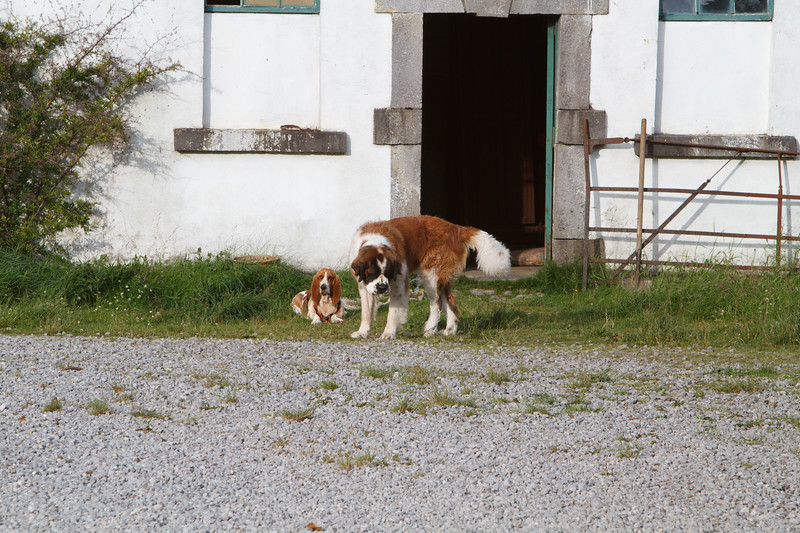 Here we have Marge the Bassett Hound and Ralph the Saint Bernard.