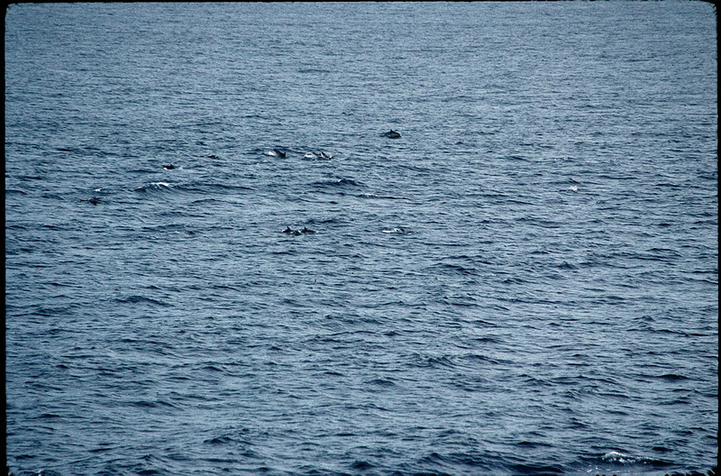 dolphins in the Med Sea