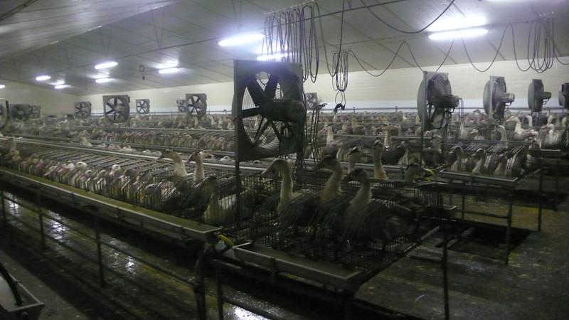 canards-foie-gras-2008-fr-B-065.jpg