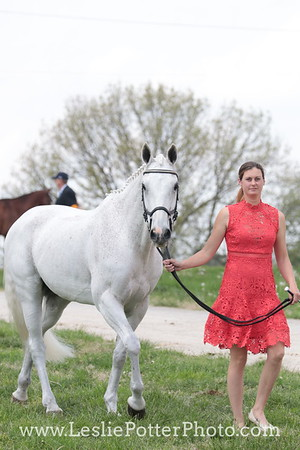 First Horse Inspection