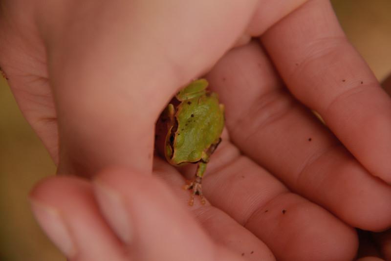 Froggieeee.JPG