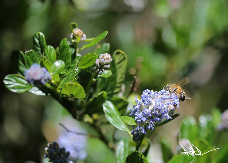 Flowers-2-2.jpg