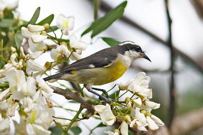 Birds Mexico 2012