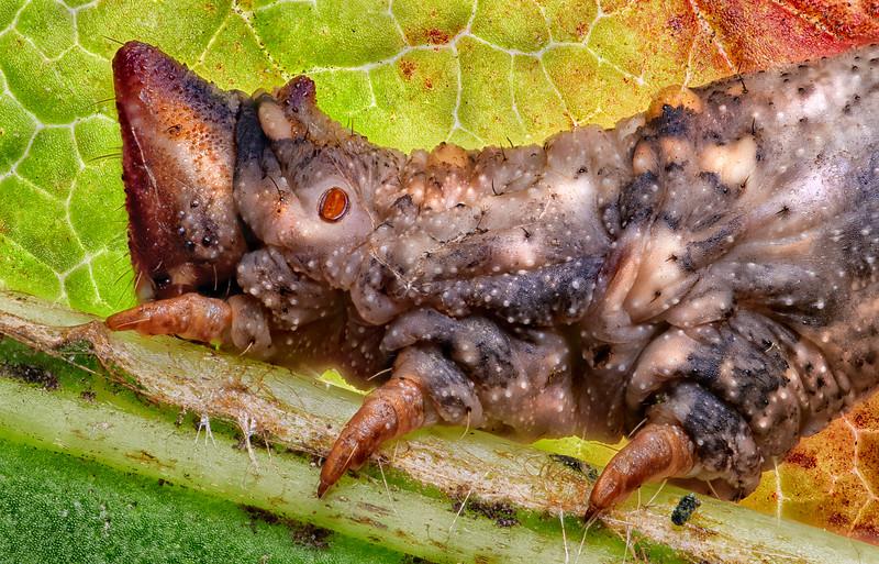 Inch worm head