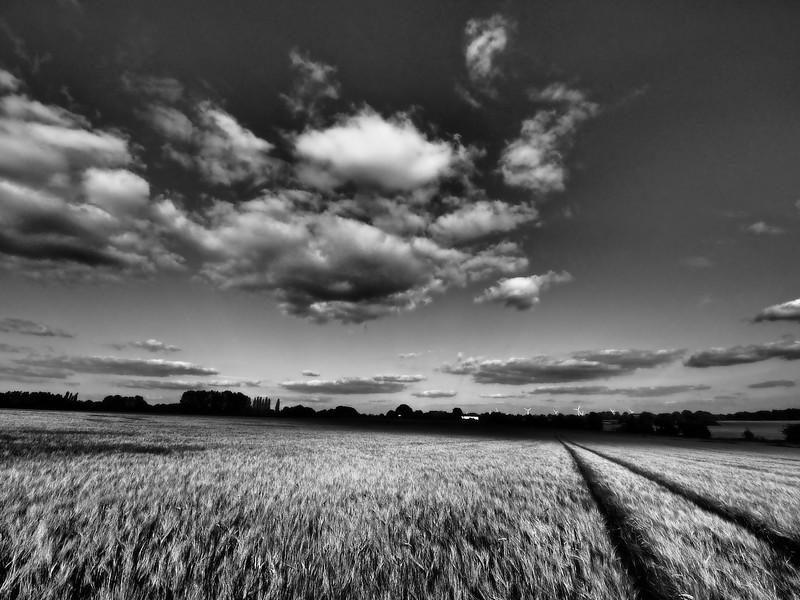 Rural landscape b/w