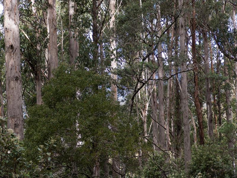 Australia-01934.jpg