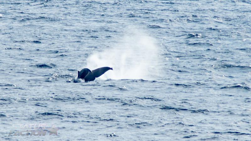 Alaska Cruise Day 1-82.jpg