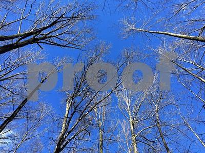 Reston: Winter Walk in the Woods
