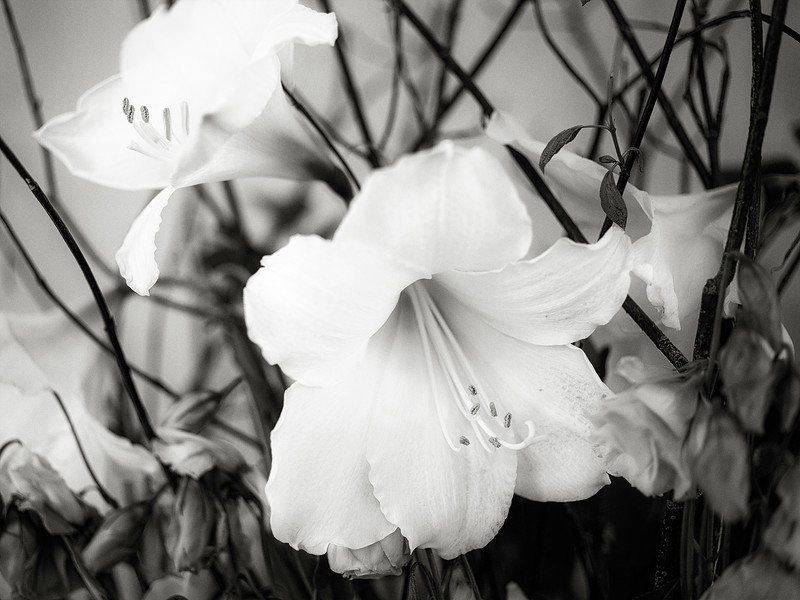 lilies-and-branches-bw.jpg