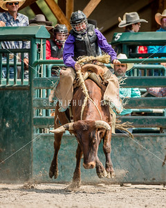BAC JR Saddle Bronc