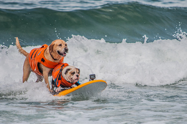 Surf Dogs in California