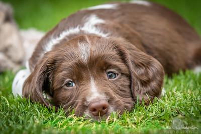 Georgina's New Puppy Shoot