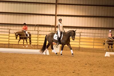 Horse 567
