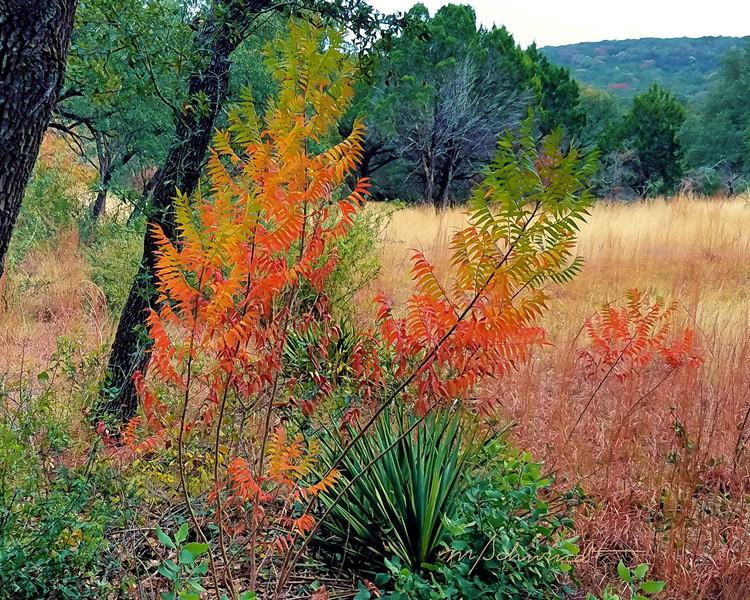 Autumn color in central Texas