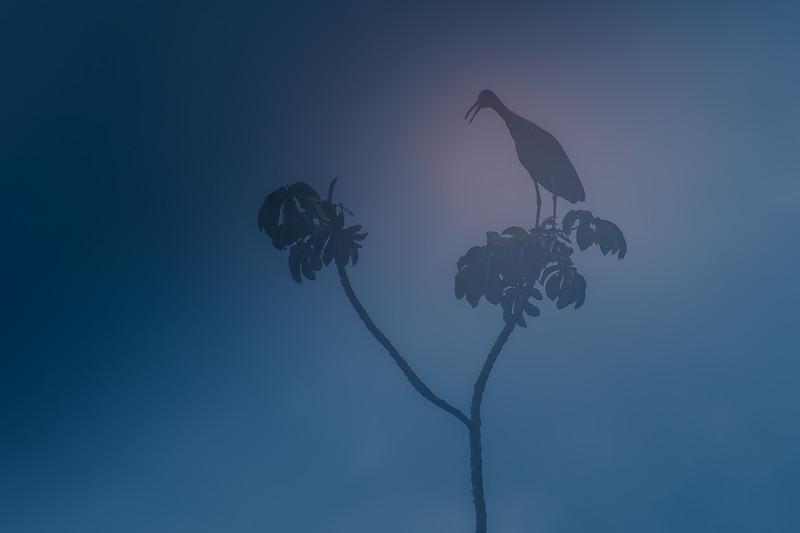 Pantanal Dawn.jpg