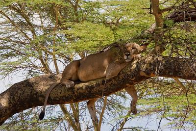 Kenya, My Favorite Photos