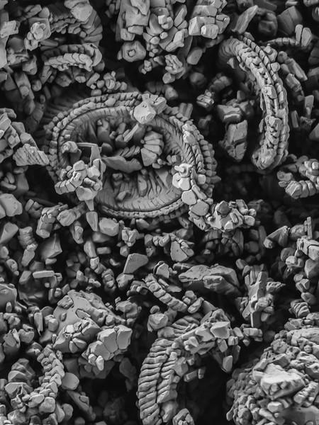 Coccolithophore fossils_Scott Chimileski.jpg