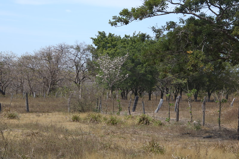 2020 Costa Rica 0420.JPG