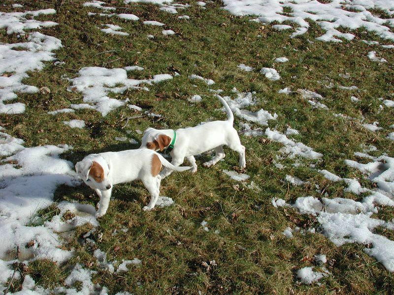 Feb 05- Puppies 023.jpg