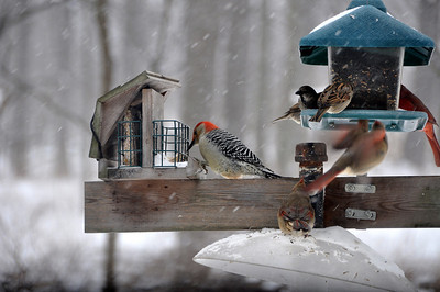 Birds - Small
