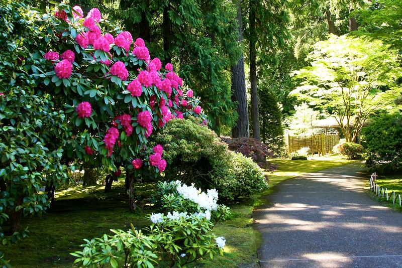 Portland Japanese Garden 6-3-11  1776.jpg