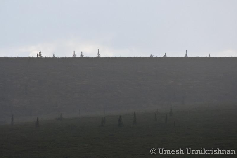 Denali National Park 269.jpg