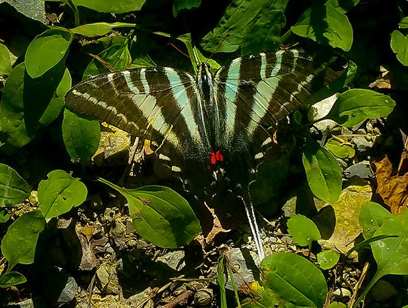 Butterfly 31.jpg