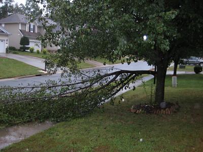 Broken tree 092910