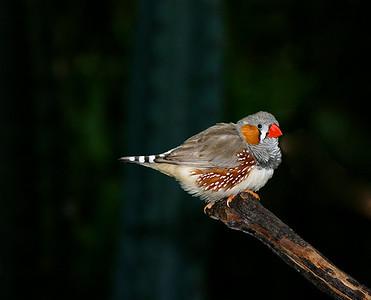 Wild Life - Birds