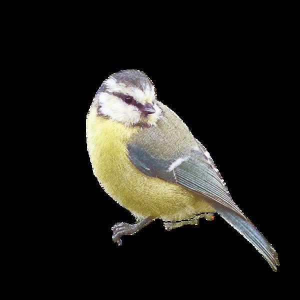 Victorian bird DeannaCarteaDesigns.png