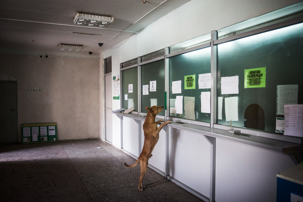 . A dog runs around a bank while civilians receive a one time cash donation from Russian backed rebels on February 25, 2015 in Debaltseve, Ukraine. After approximately one month of fighting, Russian backed rebels successfully forced Ukrainian troops to withdraw from the town of 100,00 people on February 18. Only approximately 11,000 civilians remain in the town. Debaltseve is considered an asset to both Ukrainians and the rebels due to the railway station and it\'s connection to other eastern Ukrainian towns.  (Photo by Andrew Burton/Getty Images)