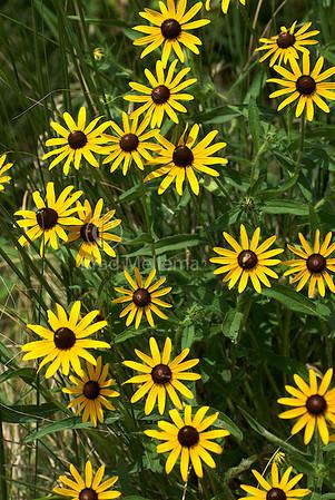 Flowers and Grasslands