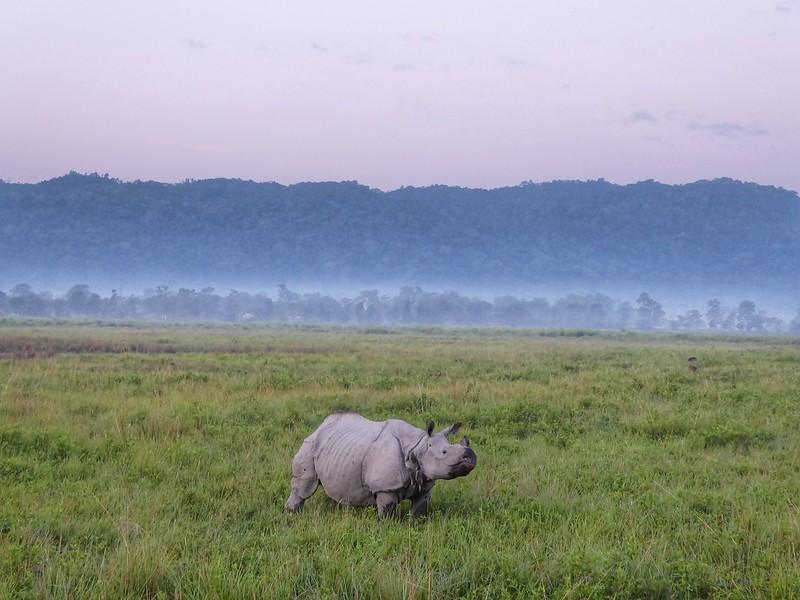 Rhino at Kaziranga Park.jpg