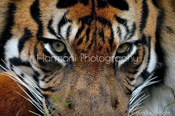 Harmoni Photography Zoo Encounters