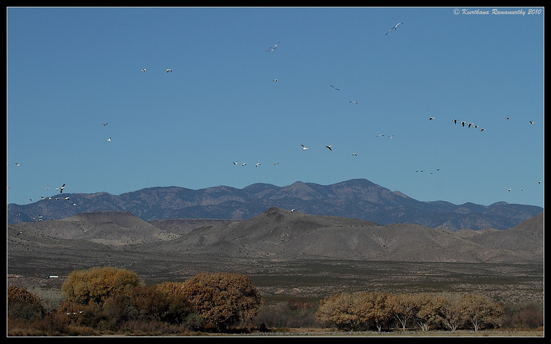Bosque Del Apache, Socorro, New Mexico, November 2010