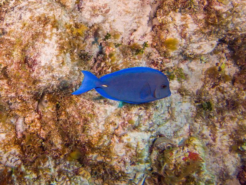 Tulum Trip - Diving 20130405-17-51 _405263504.jpg