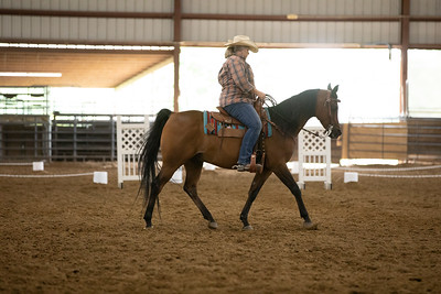 Horse 38