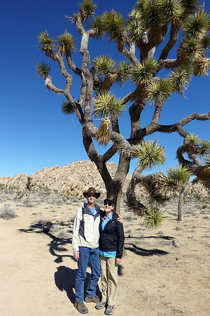 Hiking in Palm Springs and Joshua Tree, 2/11/17 to 2/15/17