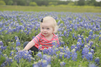 Cody Family Blue Bonnets