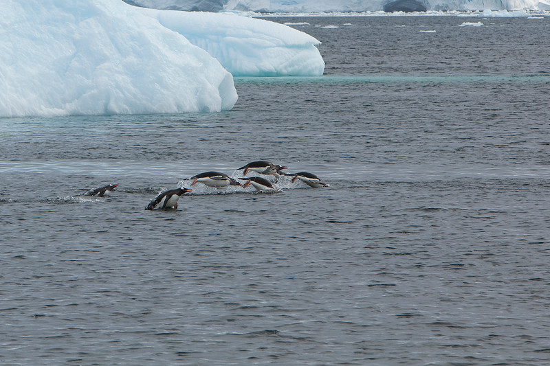 Penguins in Flight.jpg