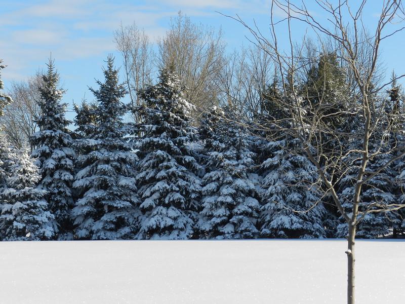 fantastic snow-7147.jpg