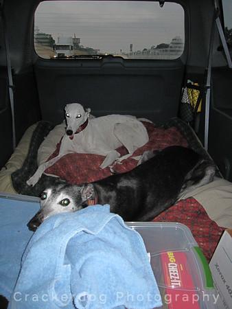 Gayle's Greyhound Gang Photos