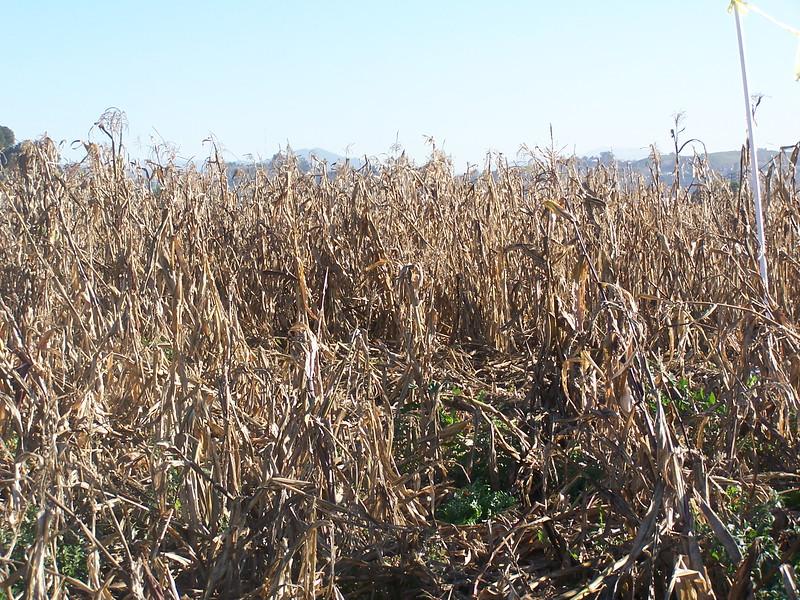 06-01-13_So_Much_Not_Corn-030.jpg