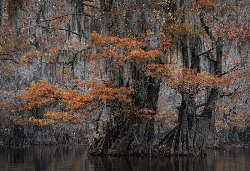 Cypress_Swamps_1117_PSokol-1159-Edit.jpg