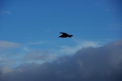 Otago seabirds