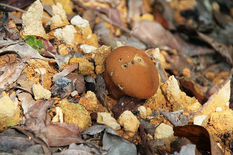 Tai Lam Country Park, MecLehose Trail Section 9, Mushroom